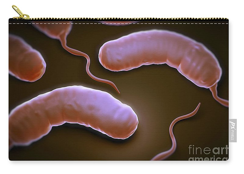 Digitally Generated Image Carry-all Pouch featuring the photograph Cholera Bacteria by Science Picture Co