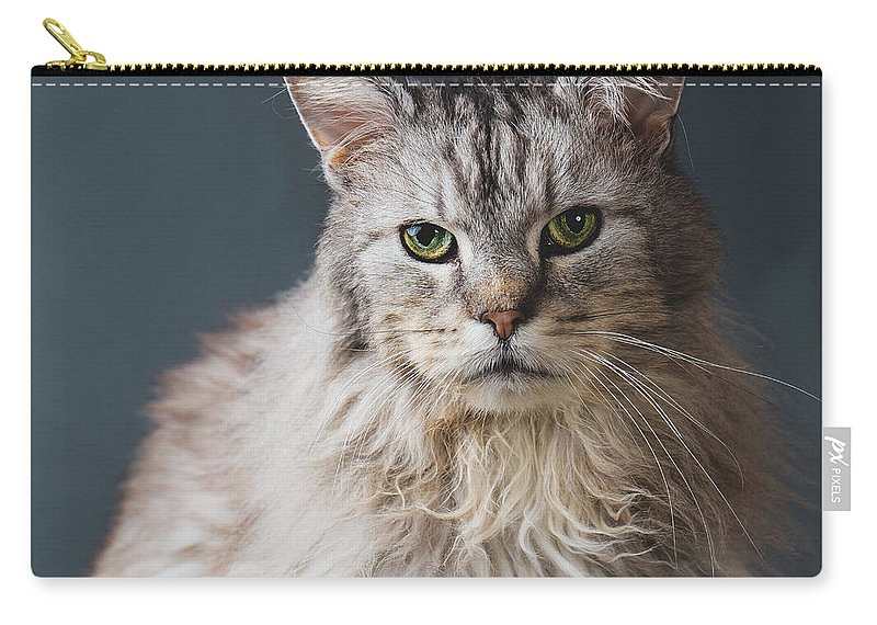 Pets Carry-all Pouch featuring the photograph Fortunate Tails by Matt Porteous
