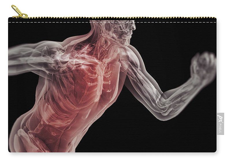 Anatomical Model Carry-all Pouch featuring the photograph Running Male Figure by Science Picture Co