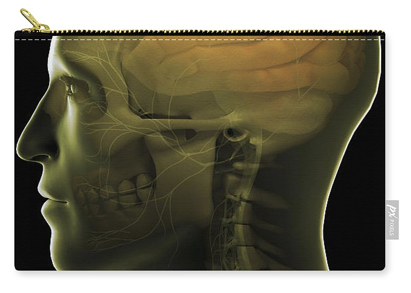 Cerebral Cortex Carry-all Pouch featuring the photograph The Human Brain by Science Picture Co