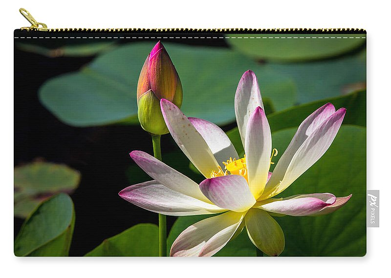 Flowers Carry-all Pouch featuring the photograph Water Lily by Dennis Goodman