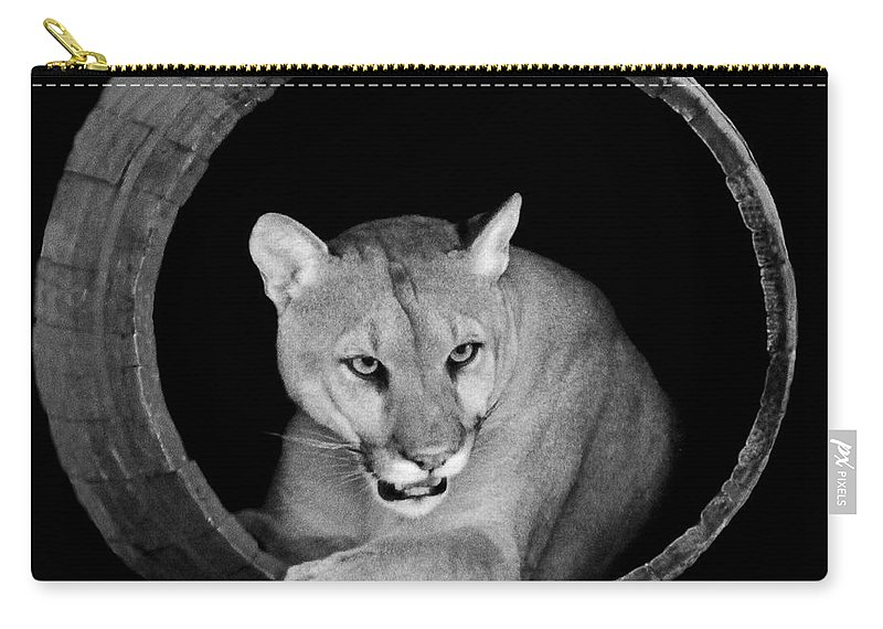 Cougar Carry-all Pouch featuring the photograph A Barrel Of Fun by Rebecca Morgan
