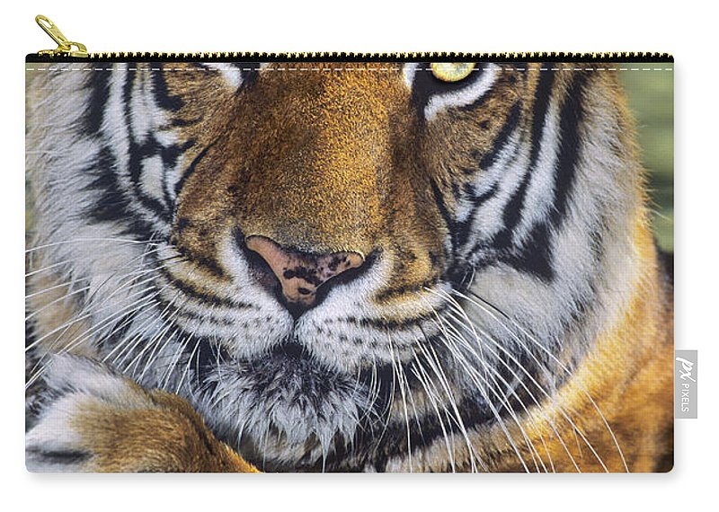 Bengal Tiger Carry-all Pouch featuring the photograph A Bengal Tiger Portrait Endangered Species Wildlife Rescue by Dave Welling