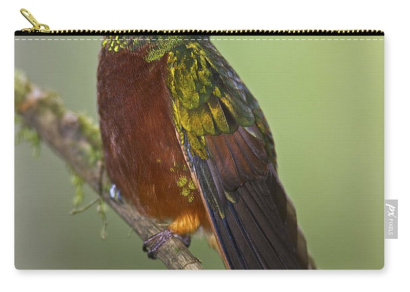 Festblues Carry-all Pouch featuring the photograph A Coronet Without A Coronet.. by Nina Stavlund