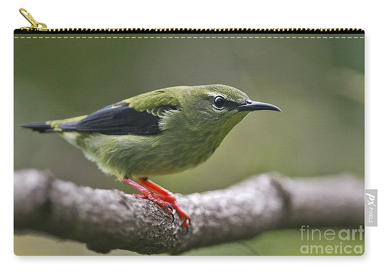 Red-legged Honeycreeper Carry-all Pouch featuring the photograph A Dash Of Red... by Nina Stavlund