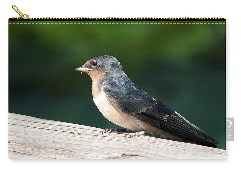 Purple Martin Carry-all Pouch featuring the digital art A Female Purple Martin Is Watching You by Eva Kaufman