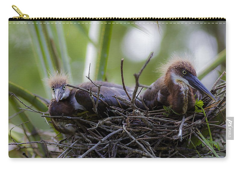 Lowry Park Zoo Carry-all Pouch featuring the photograph A Fresh Start by Stephen Brown