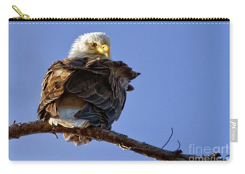 Eagles Carry-all Pouch featuring the photograph A Glance Back by Claudia Kuhn