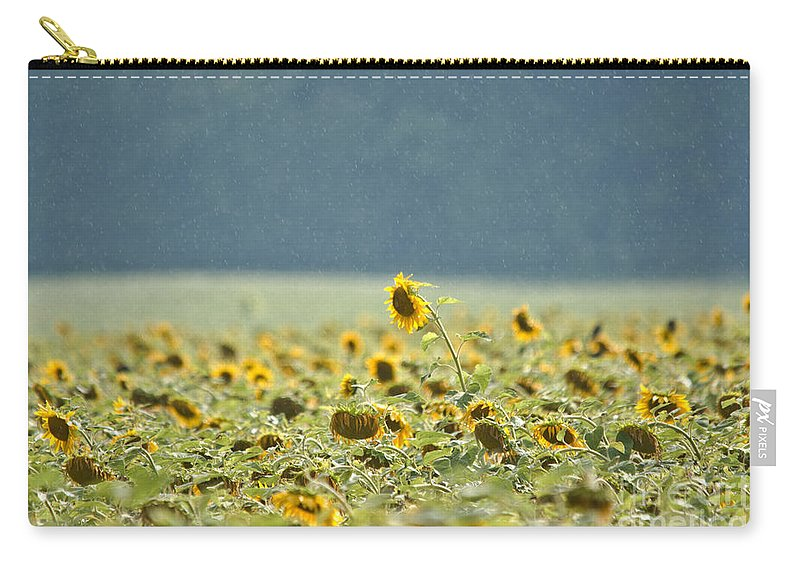 Sunflowers Carry-all Pouch featuring the photograph A Head Above The Rest by Cheryl Baxter