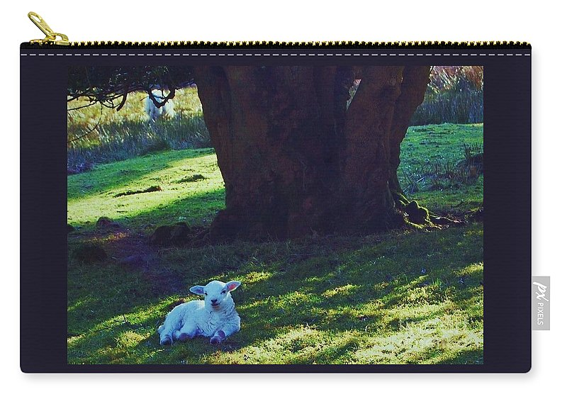 Spring Art Lamb Country Life Outdoors Travel Adventure Ancient Tree Rural Cute Expression Nature Wales Animal Portrait Idyllic Canvas Print Highly Recommended Greeting Card Easter Card Metal Frame Poster Print Available On T Shirts Shower Curtains Tote Bags Phone Cases Pouches Weekender Tote Bags And Mugs Carry-all Pouch featuring the photograph A Lamb In Wales by Marcus Dagan