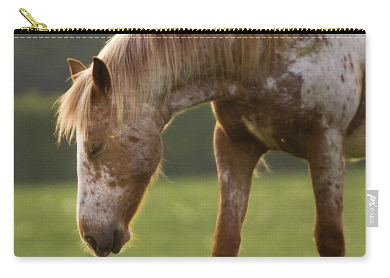 Horse Carry-all Pouch featuring the photograph A Little Nap by Angel Ciesniarska