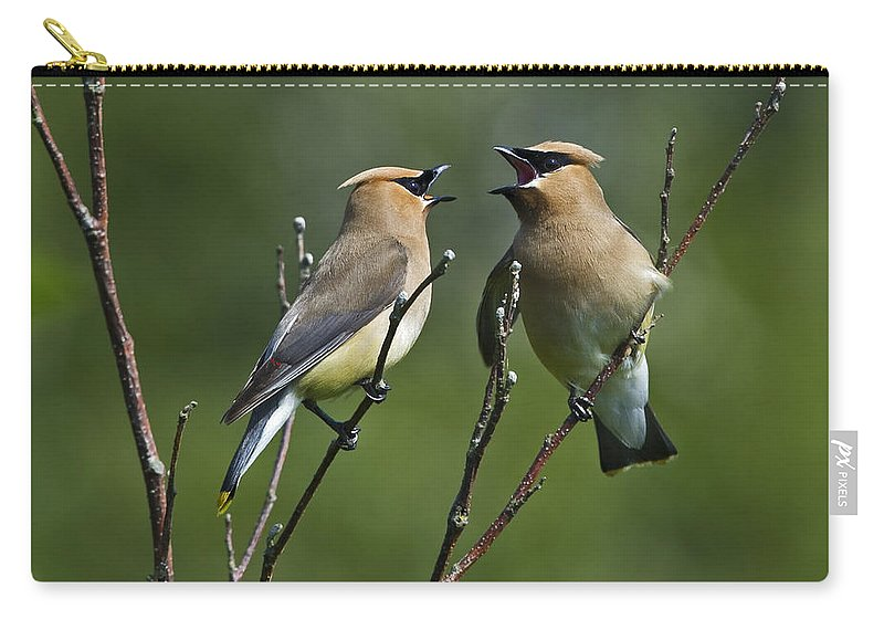 Festblues Carry-all Pouch featuring the photograph A Love Duet... by Nina Stavlund