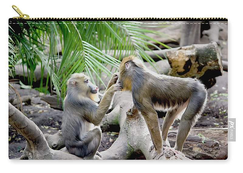 Care Carry-all Pouch featuring the photograph A Monkey Grooming Another Monkey by Jim Julien / Design Pics