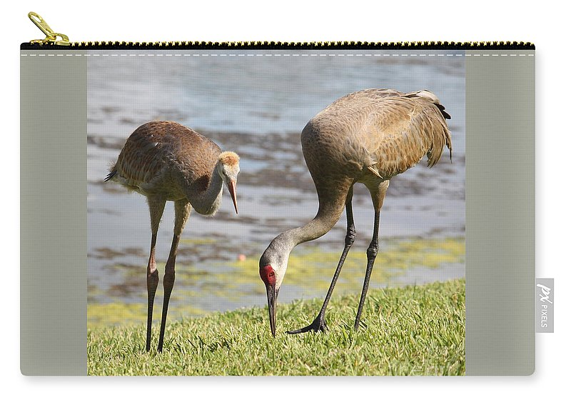 Sandhill Cranes Carry-all Pouch featuring the photograph A Mother's Lesson by Carol Groenen