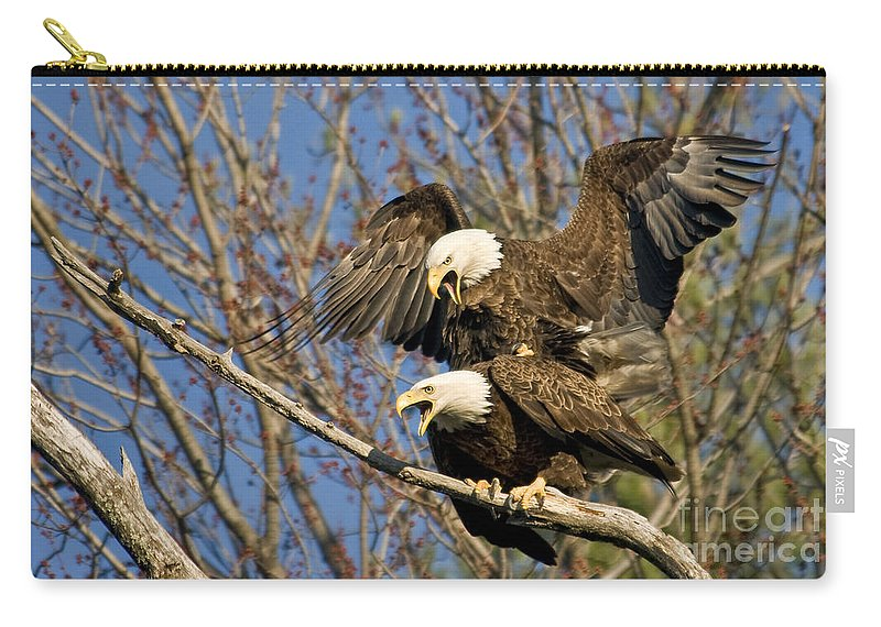 Mating Carry-all Pouch featuring the photograph A Noisy Pair by Claudia Kuhn