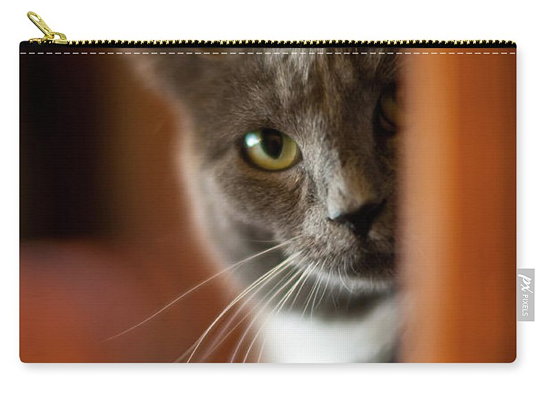 Cat Carry-all Pouch featuring the photograph A Peek by Mike Reid