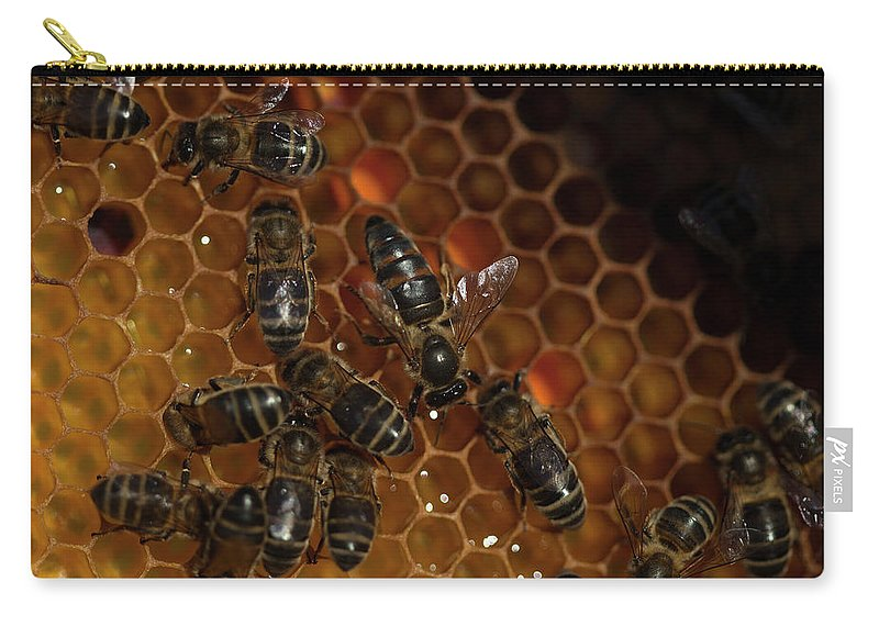 Worker Bees Carry-all Pouch featuring the photograph A Queen Bee Walks In The Center by Chico Sanchez