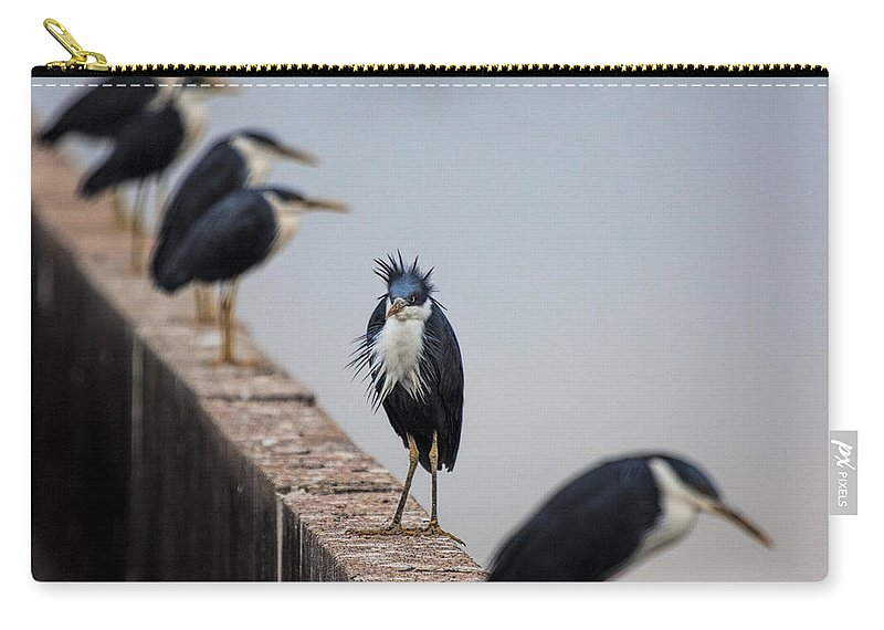 Pied-herons Carry-all Pouch featuring the photograph A Real Bad-hair Day by Douglas Barnard