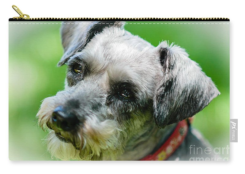 Schnoodle Carry-all Pouch featuring the photograph A Schnoodle A Schnauzer by Elvis Vaughn