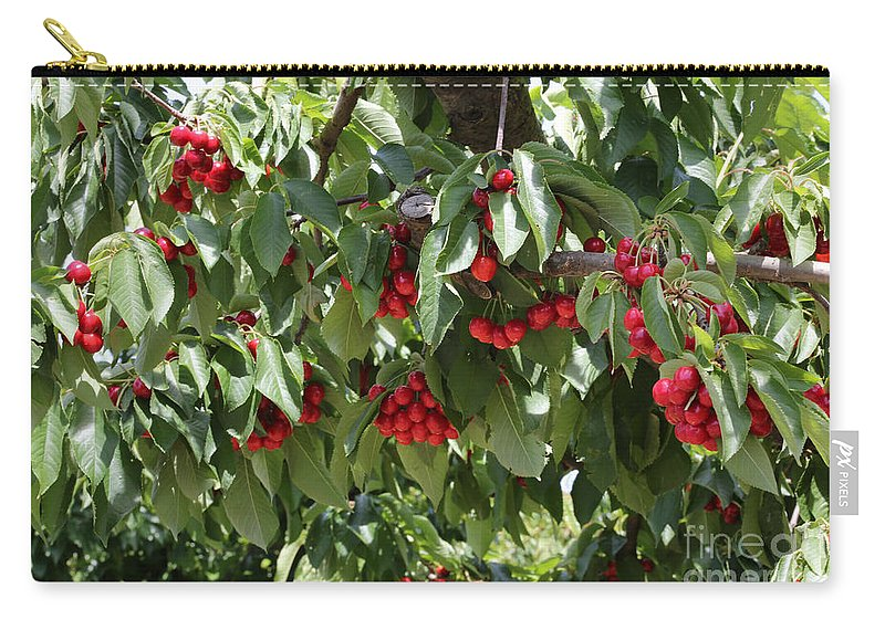 Cherry Carry-all Pouch featuring the photograph Abundant Cherries by Carol Groenen
