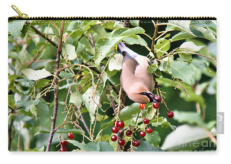Cedar Waxwing Carry-all Pouch featuring the photograph Acrobird by Cheryl Baxter