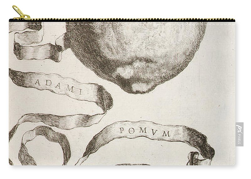 Adams Apple Carry All Pouch For Sale By Cornelis Bloemaert