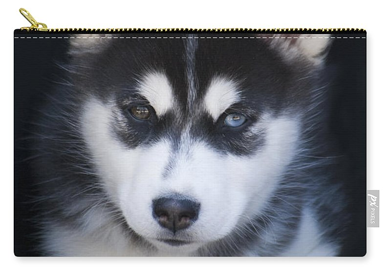 Siberian Carry-all Pouch featuring the photograph Adorable Siberian Husky Sled Dog Puppy by Kathy Clark