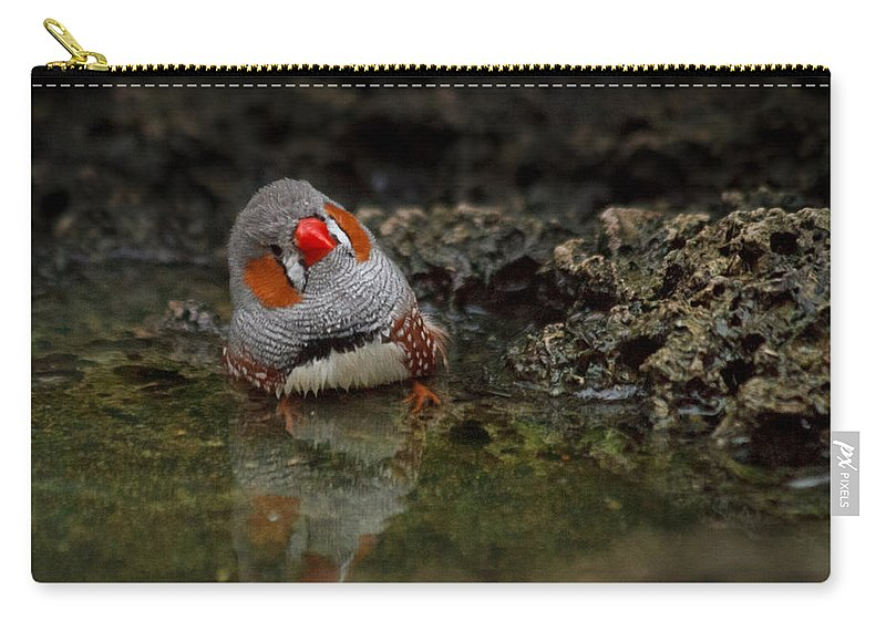 Finch Carry-all Pouch featuring the photograph Adorable Zebra Finch Taking A Bath by Eti Reid