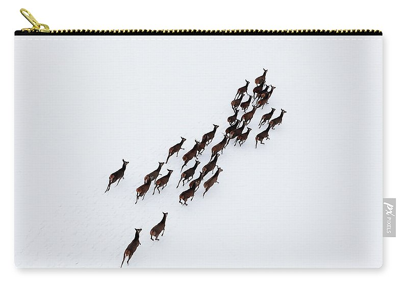 Scenics Carry-all Pouch featuring the photograph Aerial Photo Of A Herd Of Deer Running by Dariuszpa