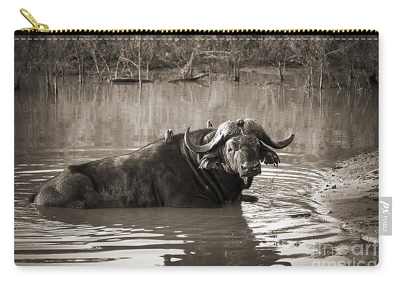 Buffalo Carry-all Pouch featuring the photograph African Buffalo by Delphimages Photo Creations