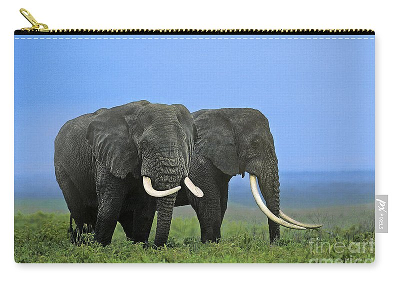 Africa Carry-all Pouch featuring the photograph African Bull Elephants In Rain Endangered Species Tanzania by Dave Welling