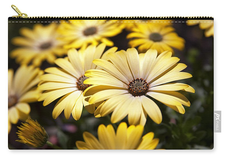 Osteospermums Carry-all Pouch featuring the photograph African Daisies by Caitlyn Grasso
