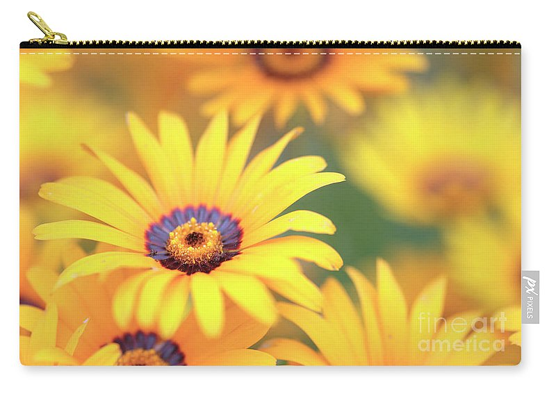 African Daisy Carry-all Pouch featuring the photograph African Daisy by Neil Overy