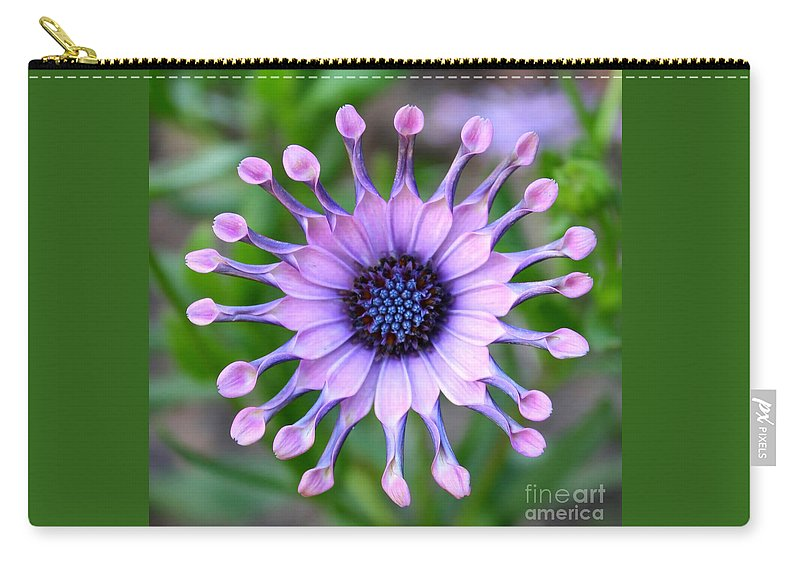 Daisy Carry-all Pouch featuring the photograph African Daisy - Square Format by Carol Groenen