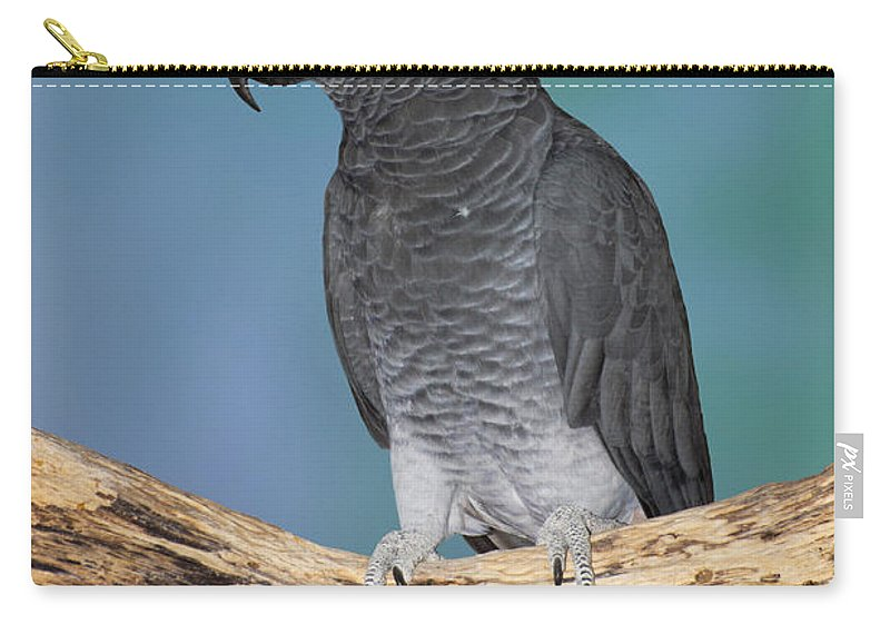 Gray Parrot Carry-all Pouch featuring the photograph African Gray Parrot by Anthony Mercieca