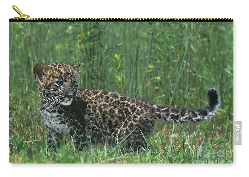 Africa Carry-all Pouch featuring the photograph African Leopard Cub In Tall Grass Endangered Species by Dave Welling
