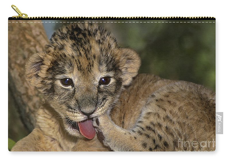 African Lion Carry-all Pouch featuring the photograph African Lion Cub Wildlife Rescue by Dave Welling