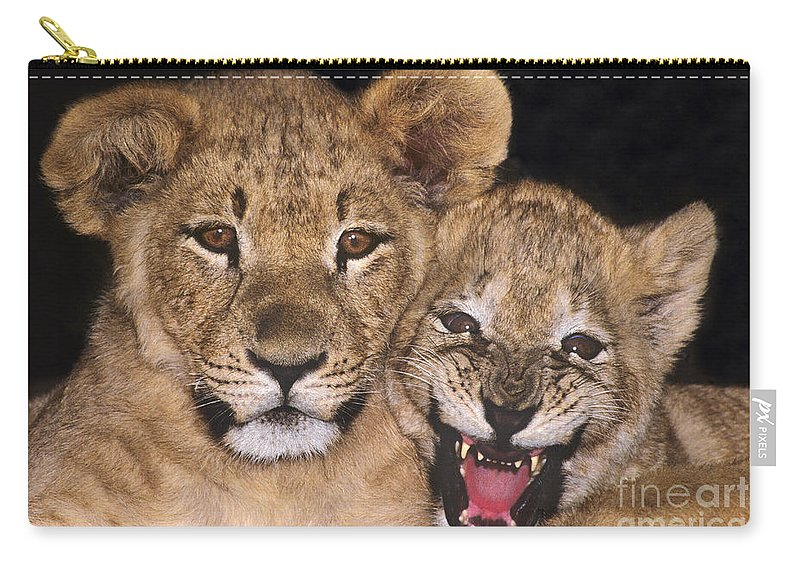 African Lions Carry-all Pouch featuring the photograph African Lion Cubs One Aint Happy Wldlife Rescue by Dave Welling