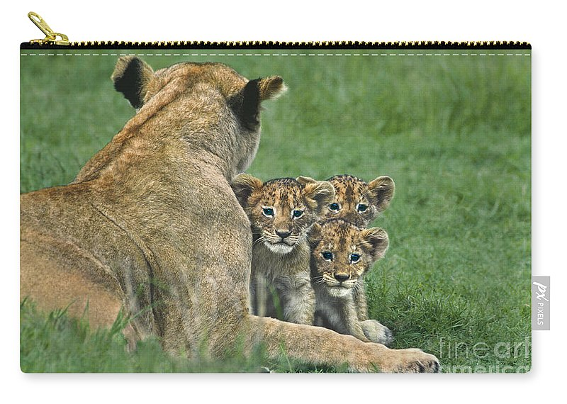 Africa Carry-all Pouch featuring the photograph African Lion Cubs Study The Photographer Tanzania by Dave Welling