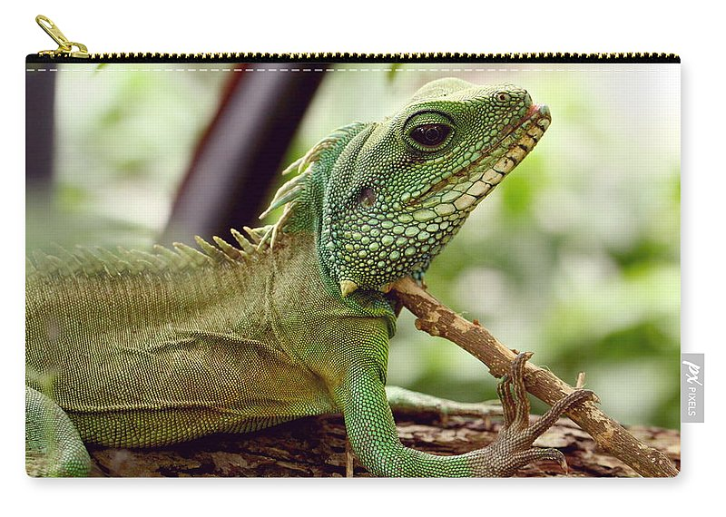Agame Carry-all Pouch featuring the photograph Agamidae by Heike Hultsch