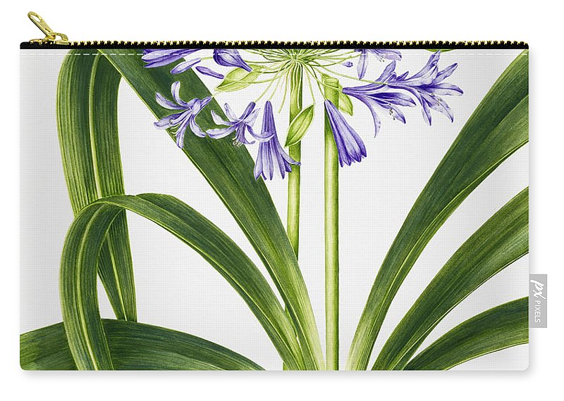 Agapanthus Carry-all Pouch featuring the painting Agapanthus by Sally Crosthwaite