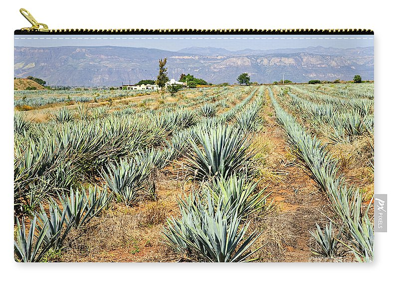 Agave Carry-all Pouch featuring the photograph Agave Cactus Field In Mexico by Elena Elisseeva