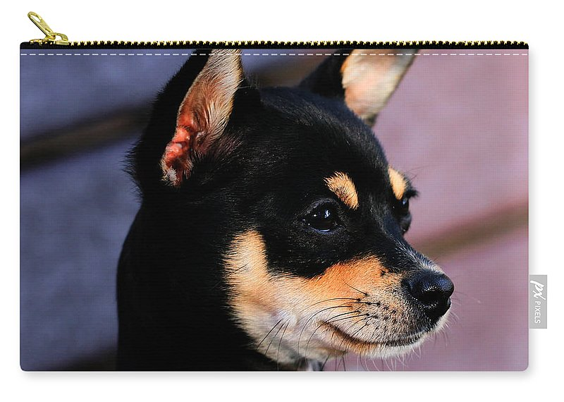 Dog Carry-all Pouch featuring the photograph Agie - Chihuahua Pitbull by Tap On Photo