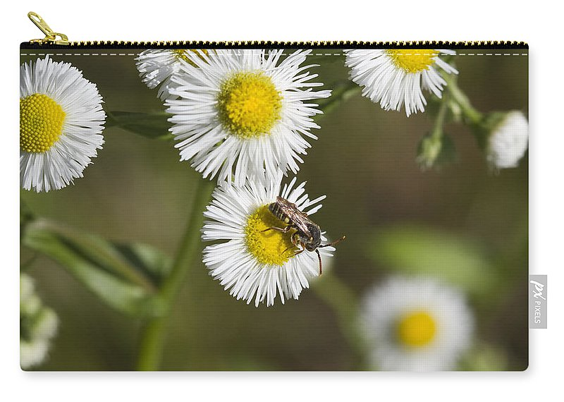 Robin's Plantain Carry-all Pouch featuring the photograph Alabama Wildflower Robin's Plantain - Erigeron Pulchellus by Kathy Clark