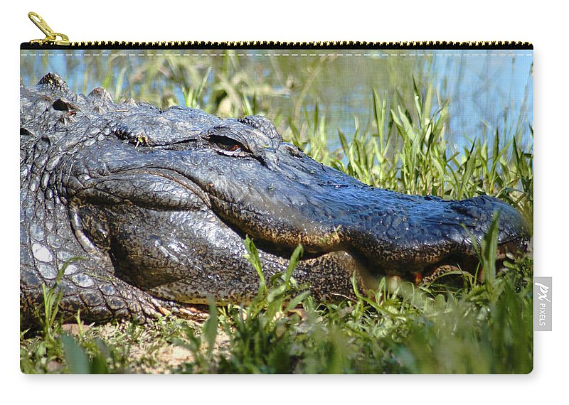 Alligator Carry-all Pouch featuring the photograph Alligator Smiling by Bob Pardue