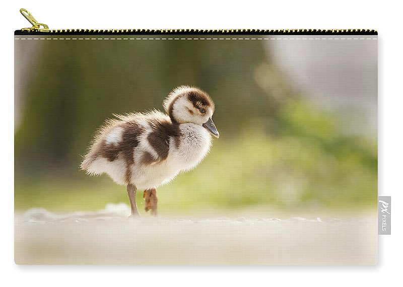 Alopochen Aegyptiacus Carry-all Pouch featuring the photograph All Alone - Egyptean Gosling And A Tree by Roeselien Raimond