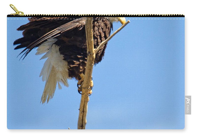 Bald Eagle Photograph Carry-all Pouch featuring the photograph All Puffed Up by Jim Garrison