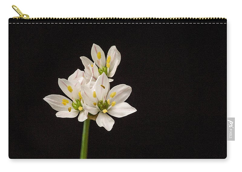 Flower Carry-all Pouch featuring the photograph Allium Species 1 by Douglas Barnett