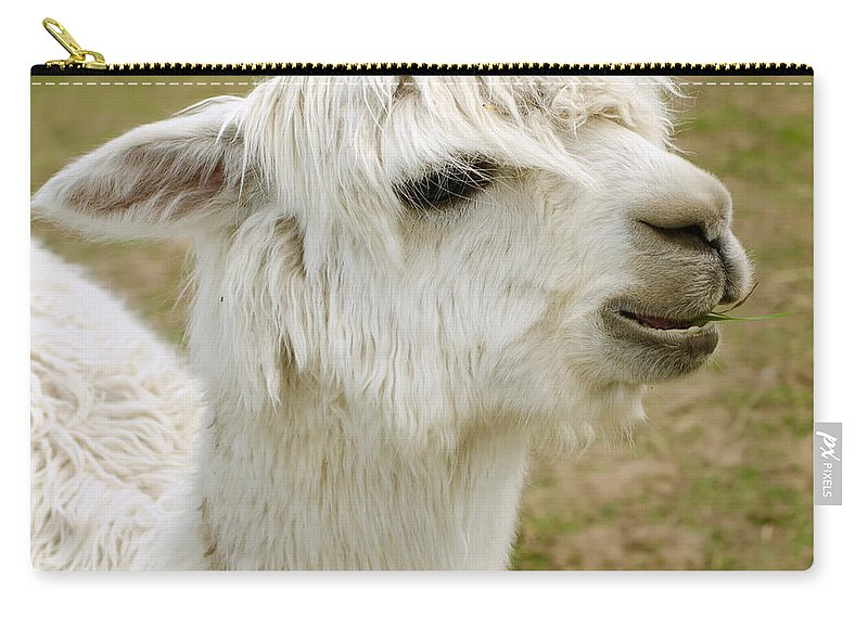 Alpaca Carry-all Pouch featuring the photograph Alpaca by TouTouke A Y