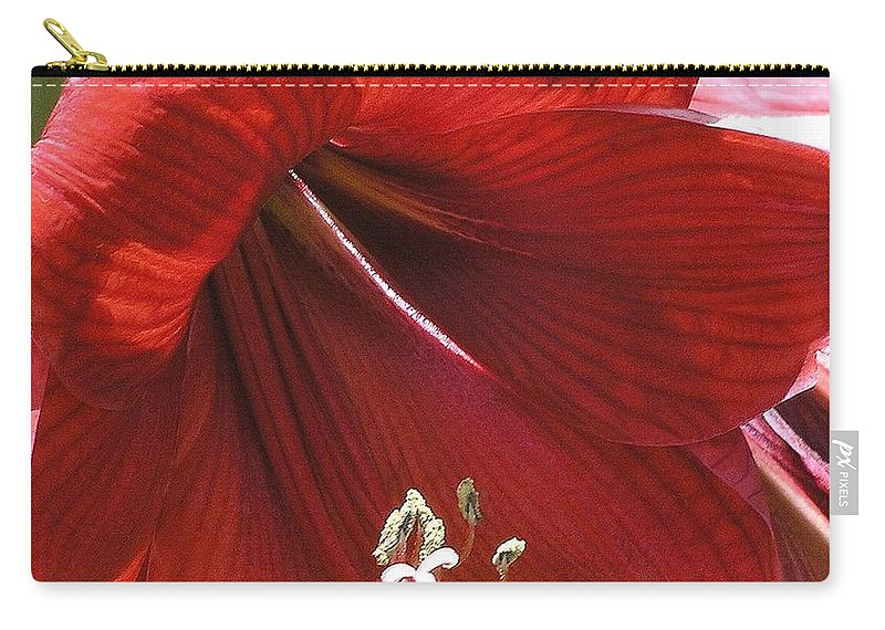 Amaryllis Carry-all Pouch featuring the photograph Amaryllis by Mary Deal